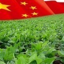 Chinese Report Shows High Levels of Glyphosate in Imported GM Soybeans | GMOs & FOOD, WATER & SOIL MATTERS | Scoop.it