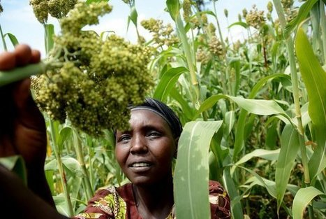 Investments in climate-proof farming will pay off for future food security | MyRoundUp | Scoop.it