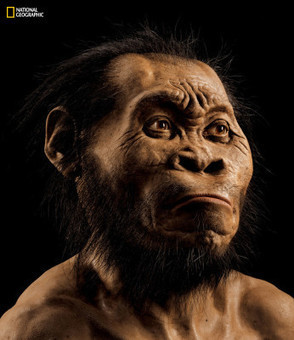 New Species of Human Relative Discovered in South African Cave – National Geographic Society Press Room | enjoy yourself | Scoop.it