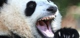 Google seo : Sortir de panda, ou comment faire ... | Veille documentaire | Scoop.it