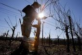 Sonoma County wine growers set goal of 100% sustainability | Food & Wine | Scoop.it