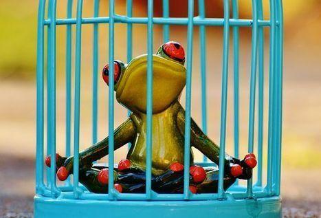 ¿Sufres el síntoma de la rana hervida? | InnoPasión | Scoop.it