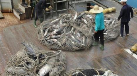 Pêche: 31,4% des stocks de poissons dans le monde sont surexploités | CIHEAM Press Review | Scoop.it