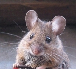 A mouse in your glass of wine ? New Report #Crisiscom@worldofwine released by VitaBella Luxury Wine   Vitabella Wine Daily Gossip   Scoop.it
