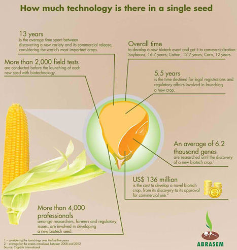Study Finds Brazilian Biotech Offers Significant Grower Benefits - Farm Futures (2013) | Bt Corn Maize - Transgenic Corn | Scoop.it