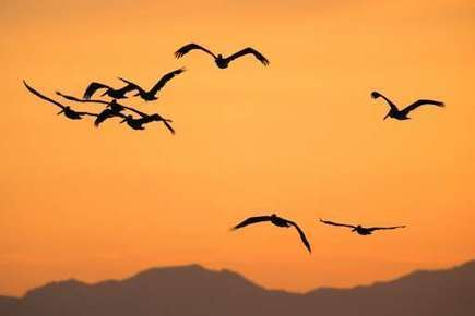 Climate change 'affecting' bird migration: eco-group | Agua | Scoop.it