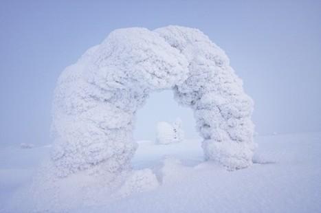 Des givres photographiques venus du froid – Lense.fr   Découverte Photo   Scoop.it