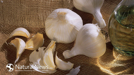 Destroy the Flu With These 3 Herbs! - Natural News Blogs | Heal the world | Scoop.it