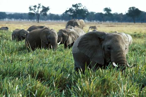 L'ONU lance une campagne de mobilisation pour mettre fin au commerce illégal de la vie sauvage | Biodiversité | Scoop.it
