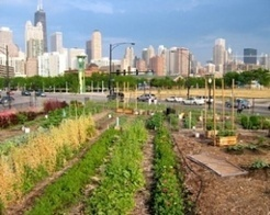 Nothing but net: Sustainable urban-farming and food forests ... | Vertical Farm - Food Factory | Scoop.it