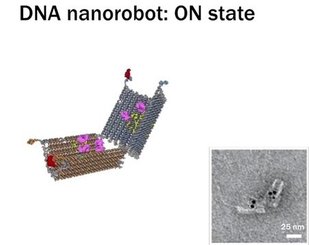 Next Big Future: Ido Bachelet announces 2015 human trial of DNA nanobots to fight cancer and soon to repair spinal cords   Embodied Zeitgeist   Scoop.it