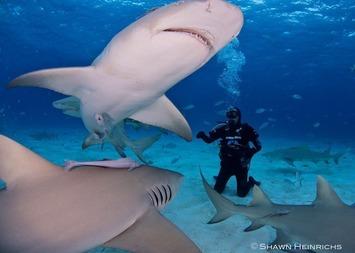 A Caribbean success story for sharks | #ocean #scuba #shark | Scuba Diving | Scoop.it