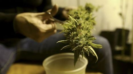 Germany allows chronic pain sufferers to grow their own cannabis | Healing Chronic Pain & Disease | Scoop.it