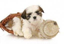 What Dog Breeds are Best for First-Time Dog Owners? | Dog Lovers | Scoop.it