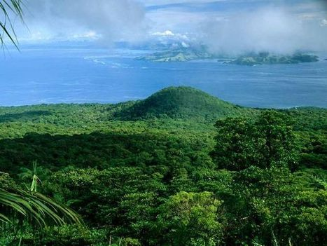 Rain Forest -- National Geographic | Rainforests - Global environments | Scoop.it