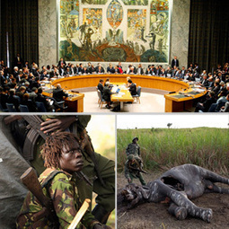 UN sanctions on armed groups financed by poaching and illicit wildlife trade in the Central African Republic and the Democratic Republic of the Congo | Wildlife Trafficking | Scoop.it