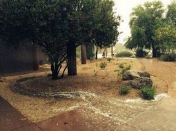 Rainwater Garden wins 2014 'Catch the Rain' photo contest | Glendale (AZ) Star | CALS in the News | Scoop.it