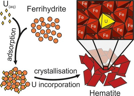 Incorporation of Uranium into Hematite during Crystallization from Ferrihydrite | Mineralogy, Geochemistry, Mineral Surfaces & Nanogeoscience | Scoop.it