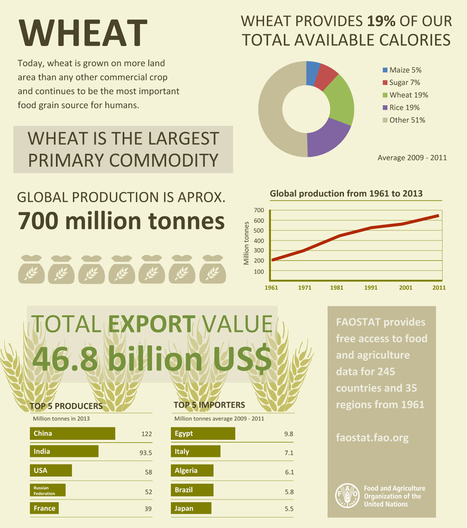 Wheat - the largest primary commodity | My MPMI | Scoop.it