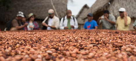 Heifer Projects Align with Fair Trade Principles | Heifer International | Charity Ending Hunger And Poverty | fair trade chocolate | Scoop.it