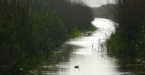 Cañete avala un gasoducto de Goldman Sachs que invadirá un humedal protegido | Lo riu és vida | Scoop.it