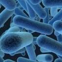 Antibiotico-resistenza. Individuata una molecola che combatte i biofilm di batteri - Quotidiano Sanità | AMR - Antibiotico resistenza e alimenti di origine animale | Scoop.it
