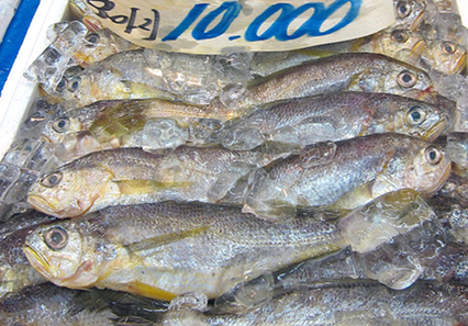 Seafood Mislabeling: How Does it Impact You? | EcoWatch | Scoop.it