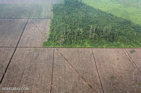 Will zero deforestation commitments save Indonesia's forests?   Environmental Concern   Scoop.it