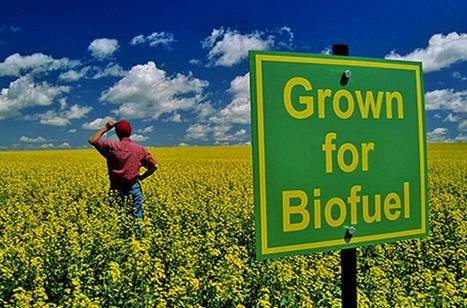 Food or Fuel? G8 under pressure to rethink biofuel