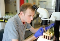 CALS Student Perspectives | David Higgins | Fellowship-winner focuses on flower development | Research from the NC Agricultural Research Service | Scoop.it