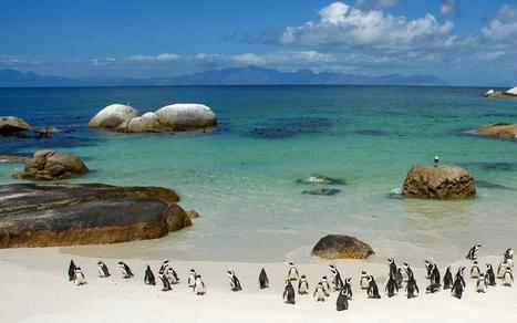 Beautiful scenery of South Africa - tours travel | What Surrounds You | Scoop.it