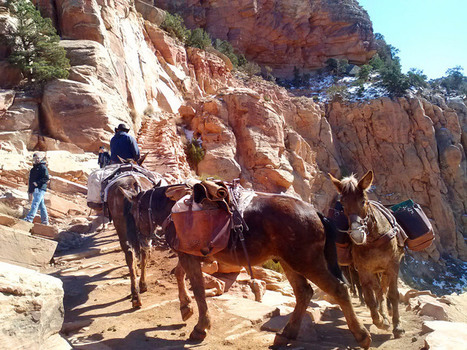 Grand Canyon Things to do: Cedar Ridge Hike | Grand Canyon Vacation | Scoop.it