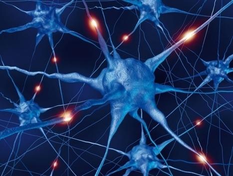 Neuroscience: Where is the brain in the Human Brain Project? | Eléments d'économie,de technologies, de sciences | Scoop.it