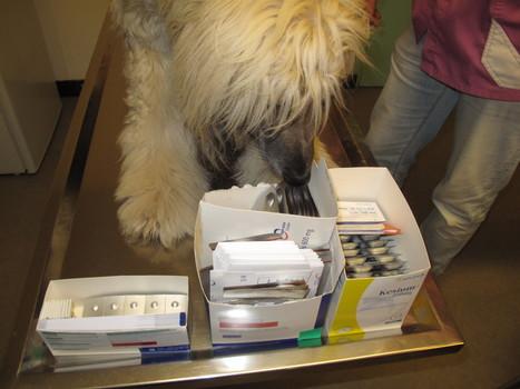 Les vétérinaires privés de médicaments : le projet de loi de la discorde - L'Union   Droit-Règlementation   Scoop.it
