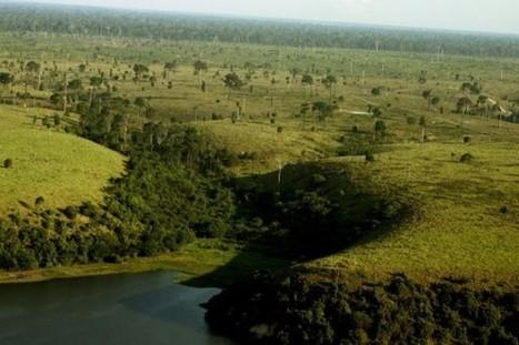 Protégez les animaux d'Amazonie : n'achetez pas de cuir !   Attitudes face au cuir   Scoop.it