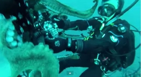 Video: Diver Wrestles Giant Octopus, And Wins | 21st Century Innovative Technologies and Developments as also discoveries, curiosity ( insolite)... | Scoop.it