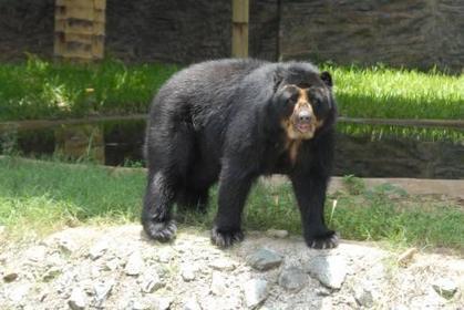 Recuperadas 57 especies de animales silvestres este año - EntornoInteligente | Legislación científica | Scoop.it