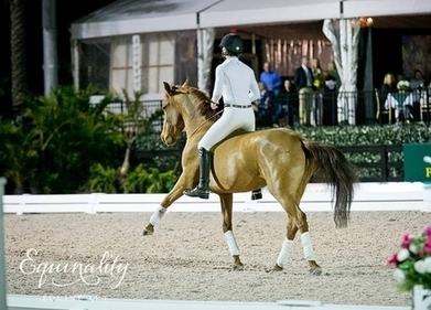 Mustang Rune Raises the Roof at Global Dressage Festival | Dressage Dreams | Scoop.it
