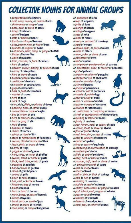 Animal groups collective nouns | ELT resources designed for building EFL-ESL lessons & courses | Scoop.it