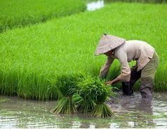 Call for More Action on Global Food Security to Beat Hunger | Food Security | Scoop.it