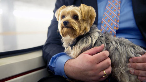 New Bill Would Allow Pets on Amtrak | Pet News | Scoop.it