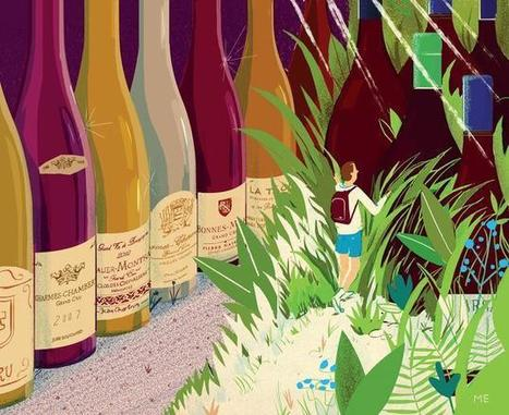 Chablis Brocard, Faiveley... #Burgundy Wines That Won't Break the Bank | Vitabella Wine Daily Gossip | Scoop.it