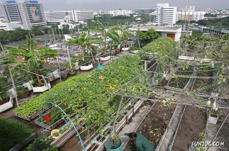 Funzug.com | Urban Farming Around the World | City, Rooftop, Oakland, Center, Farms | PlanetNews | Scoop.it