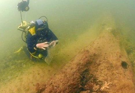 Une forêt vieille de 10 000 ans découverte par hasard sous la mer du Nord | Un peu de tout et de rien ... | Scoop.it