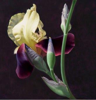 Paisajes y Bodegones: Galería: Nuevas pinturas de flores hiperrealistas | Dibujo y pintura | Scoop.it
