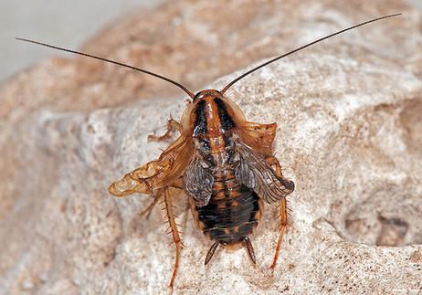 La metamorfosis de los insectos depende de una simple cadena corta de ARN / Noticias / SINC | Bichos en Clase | Scoop.it
