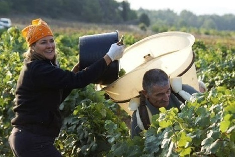 French bulk wine prices jump by up to 65% | Autour du vin | Scoop.it