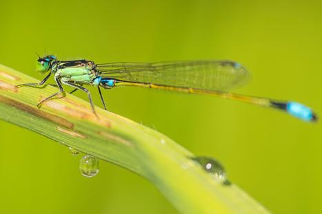 Les pesticides réduisent considérablement la biodiversité dans les milieux aquatiques [en anglais] | EntomoNews | Scoop.it