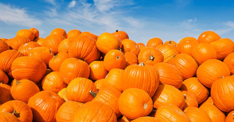 How Does the Perfect Pumpkin End Up in Your Supermarket? | Food Value Networks | Scoop.it