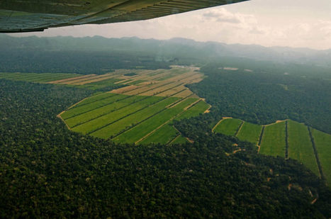 Exclusive: Rainforest rapidly cleared for sugarcane in Bolivia   Farming, Forests, Water, Fishing and Environment   Scoop.it